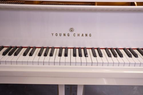 Young Chang White Gloss 1988 5'1